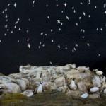 Опубликованы лучшие снимки животных в природе Британии