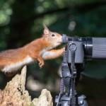 Опубликованы самые смешные фото животных